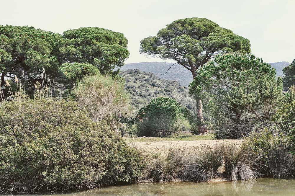 Bäume in der Maremma