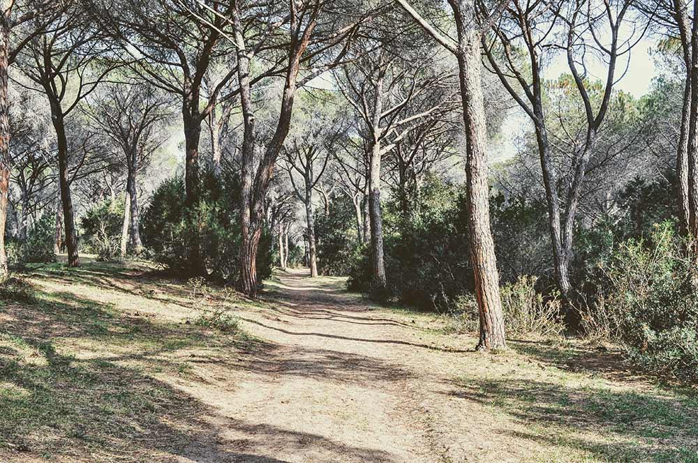 Wandern durch einen Pinienwald in der Maremma
