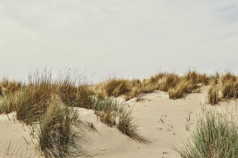 Am Strand in der Maremma
