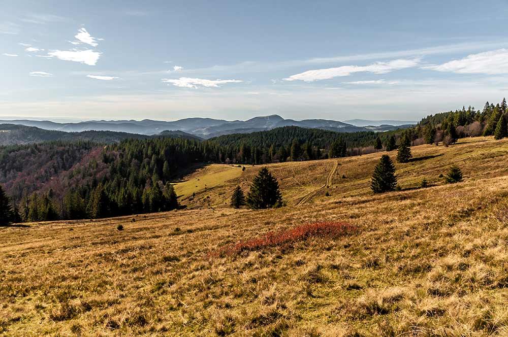 Aussicht über den Südschwarzwald