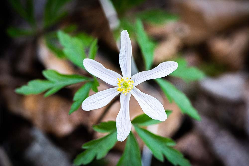 bild-anemone