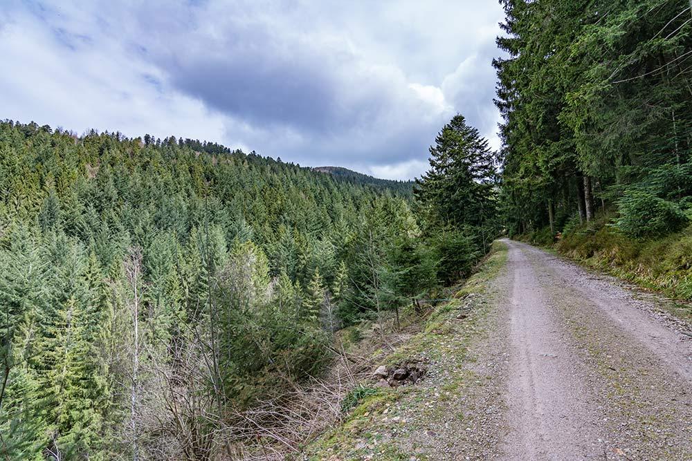 Das Bild zeigt einen Abschnitt des Wanderwegs auf den Gipfel der Hornisgrinde.