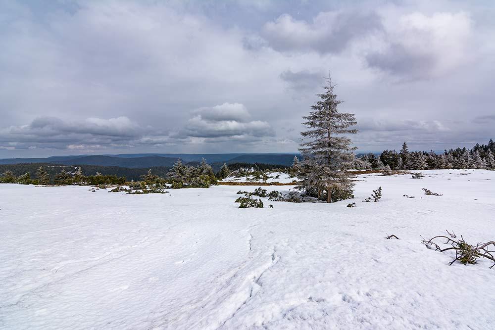 Das Bild zeigt den Grindenpfad im Winter.