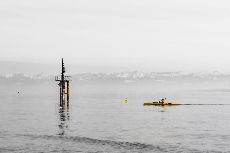 Bild von einem Ruderer am Bodensee