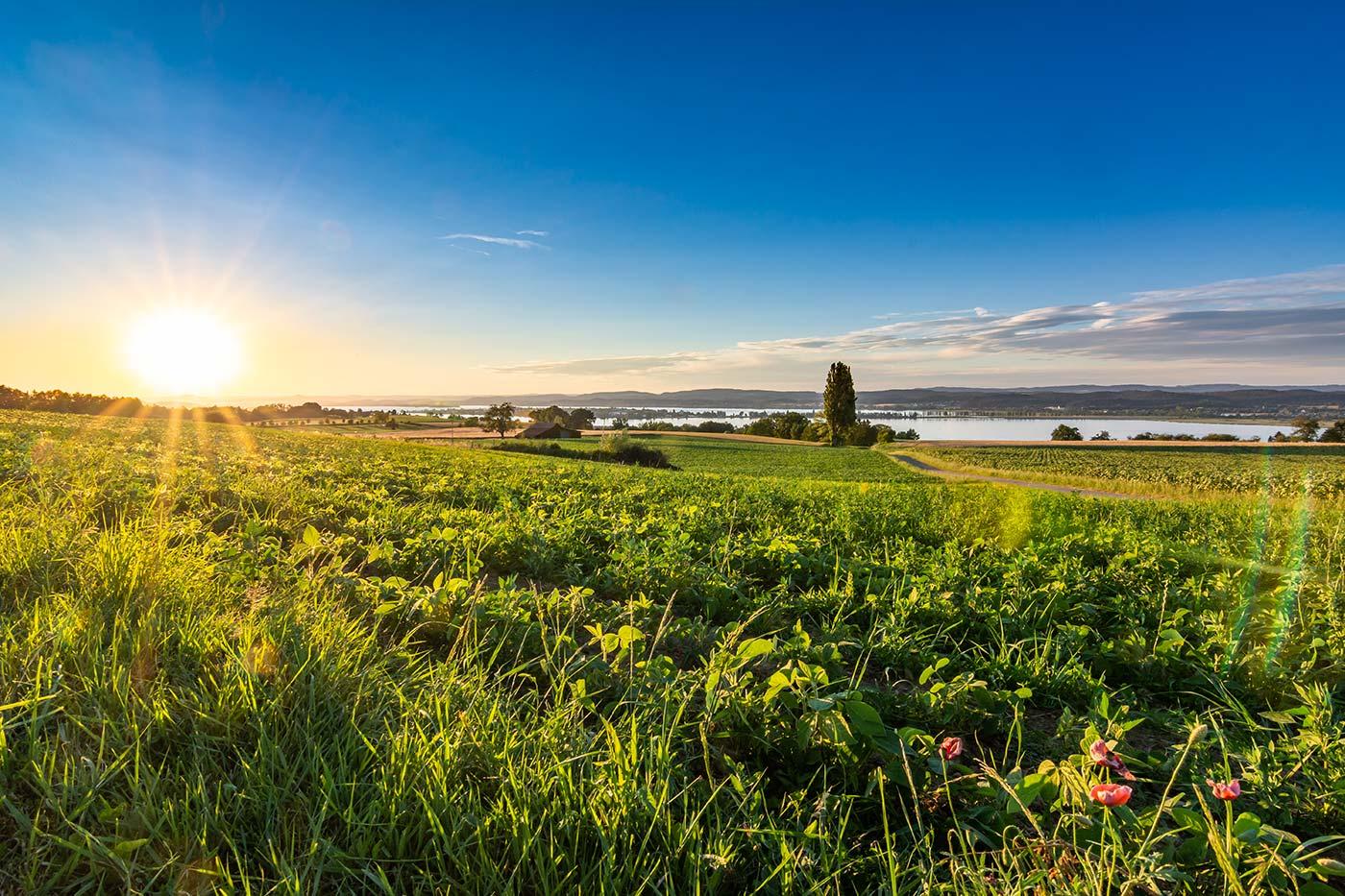In den Hügeln über Tägerwilen liegt einer der besten Aussichtspunkte mit Blick über den Untersee des Bodensees und die Insel Reichenau